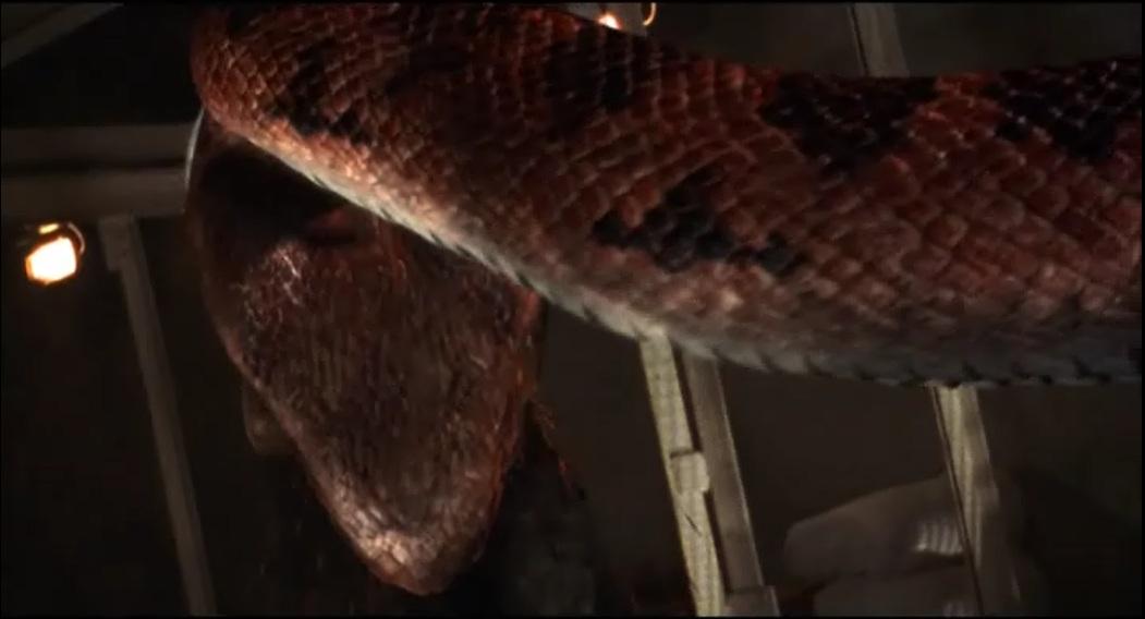 Angel boris in boa vs python 9